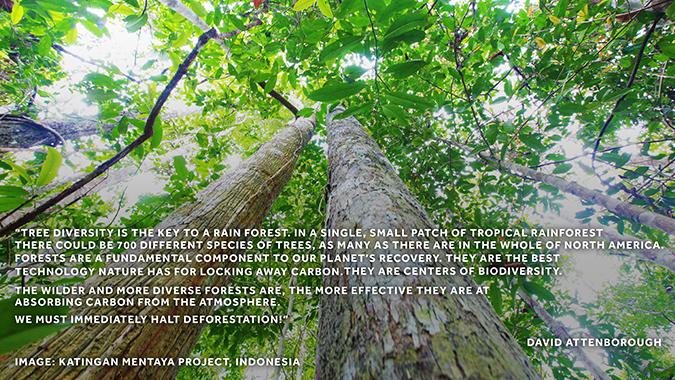 Attenborough rainforest