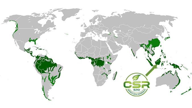 Rainforest map